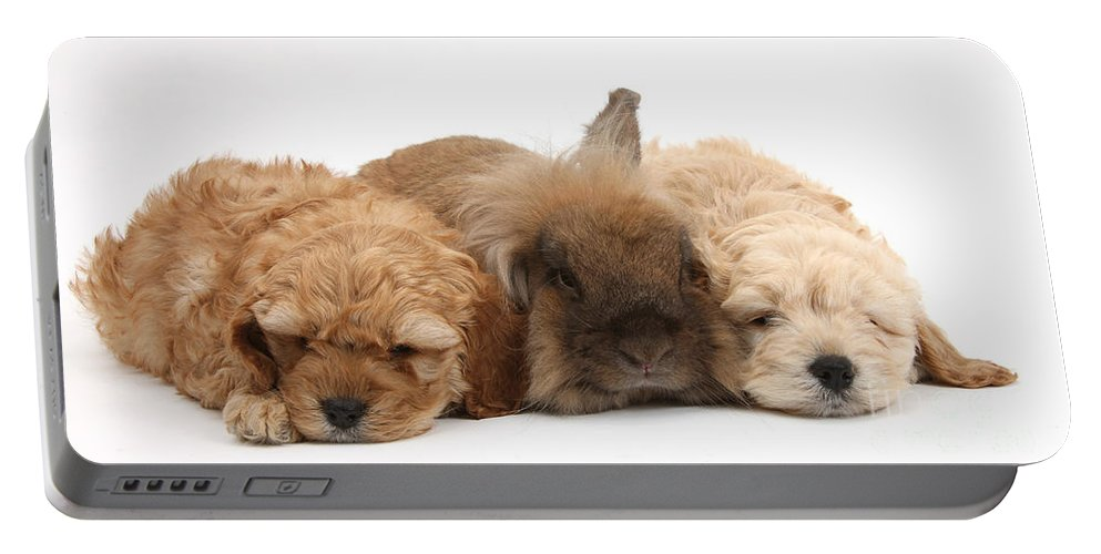 Animal Portable Battery Charger featuring the photograph Cockerpoo Puppies And Rabbit by Mark Taylor