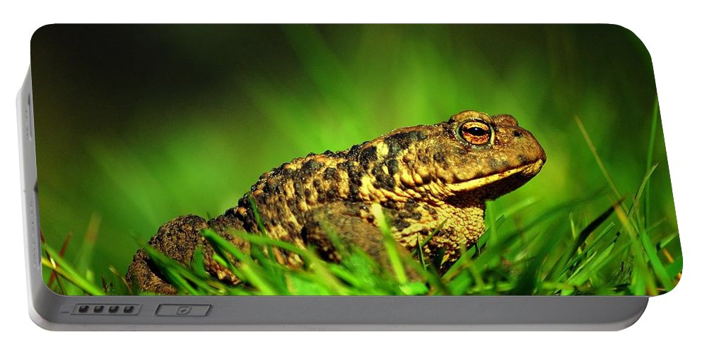 Common Toad Portable Battery Charger featuring the photograph Common Toad by Gavin Macrae