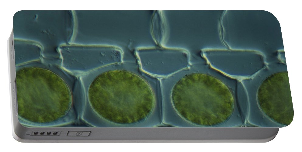 Science Portable Battery Charger featuring the photograph Conjugation In Spirogyra Algae Lm by M. I. Walker