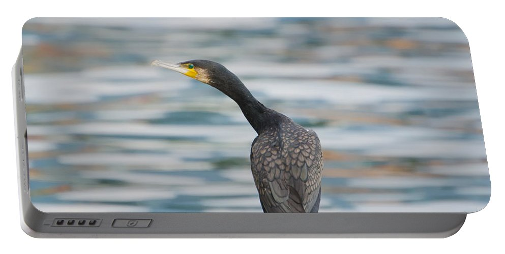 Cormorant Portable Battery Charger featuring the photograph Cormorant Bird by Mats Silvan