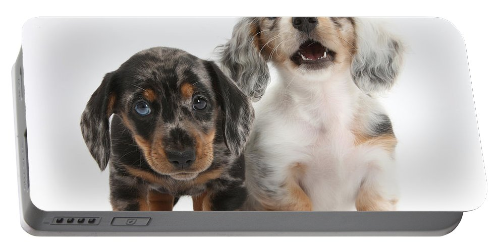 Animal Portable Battery Charger featuring the photograph Dachshund Puppies by Mark Taylor