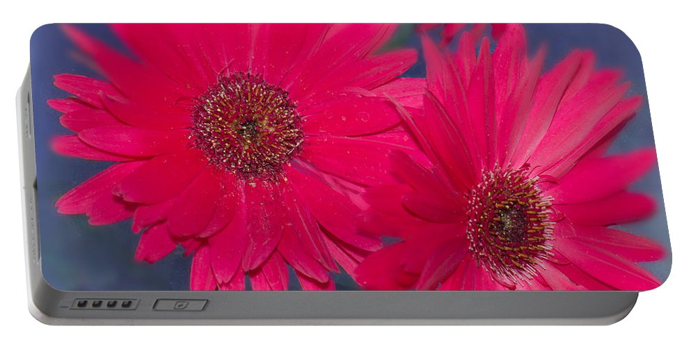 Gerbera Daisy Portable Battery Charger featuring the photograph Daisy Love by Betty LaRue