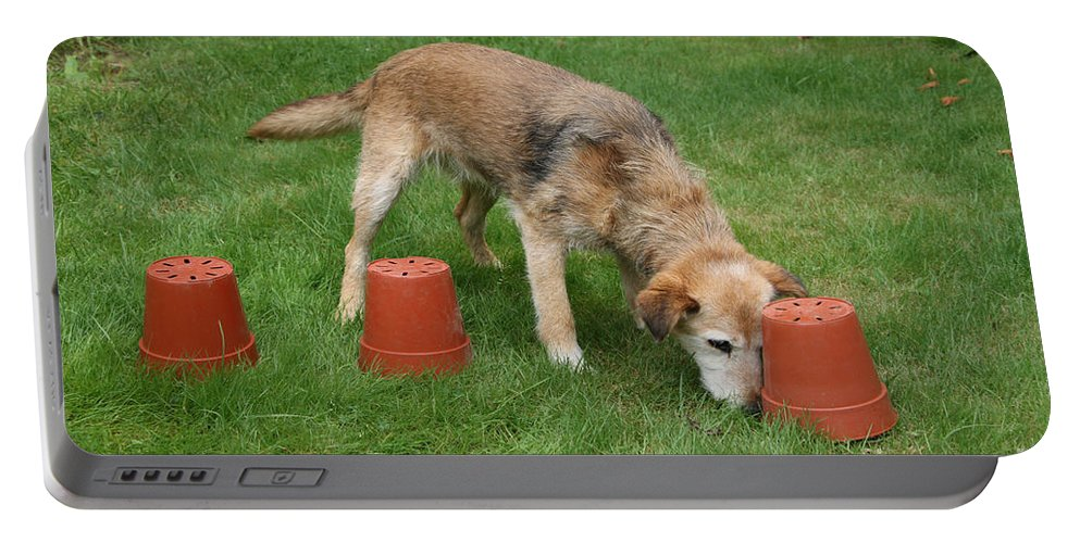 Animal Portable Battery Charger featuring the photograph Dog Playing by Mark Taylor