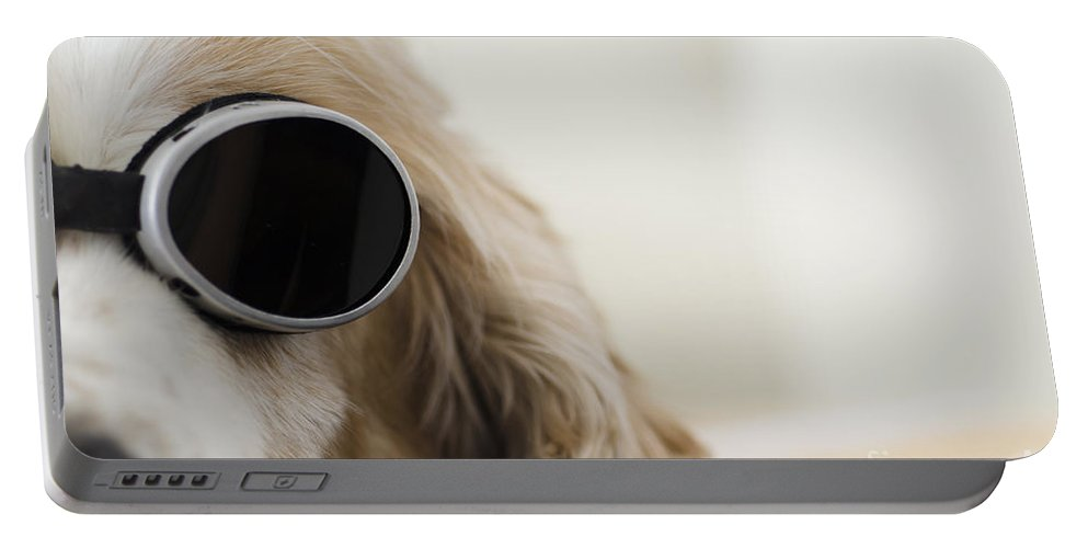 Dog Portable Battery Charger featuring the photograph Dog With Sunglasses by Mats Silvan