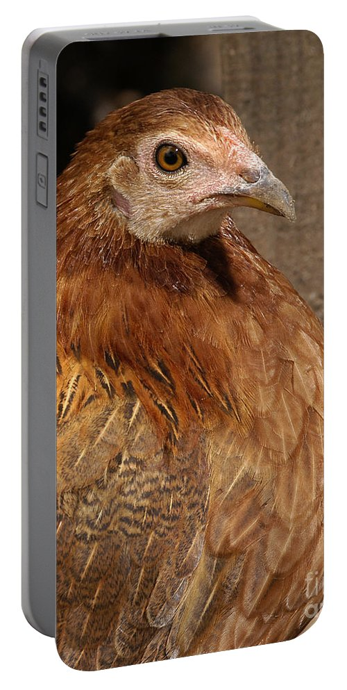 Chicken Portable Battery Charger featuring the photograph Domestic Chicken by Raul Gonzalez Perez