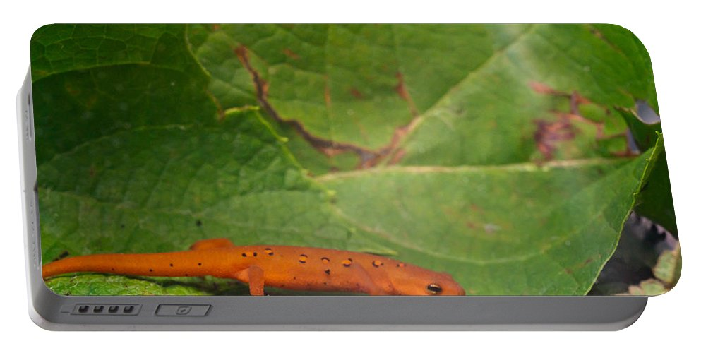 Eastern Portable Battery Charger featuring the photograph Easterm Newt Nnotophthalmus Viridescens 15 by Douglas Barnett