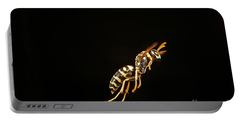 Eastern Yellow Jacket Portable Battery Charger featuring the photograph Eastern Yellow Jacket Wasp In Flight by Ted Kinsman