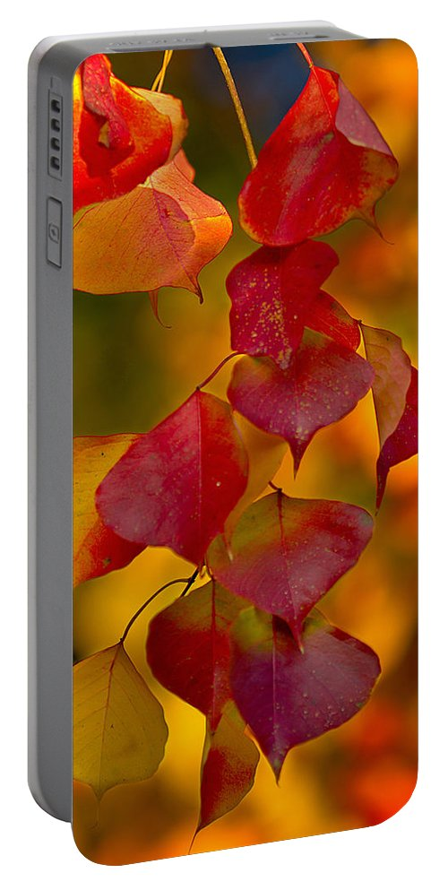 Fall Portable Battery Charger featuring the photograph Fall Color 1 by Dan Wells
