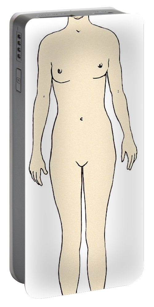 Illustration Portable Battery Charger featuring the photograph Female, Full Anterior View by Science Source