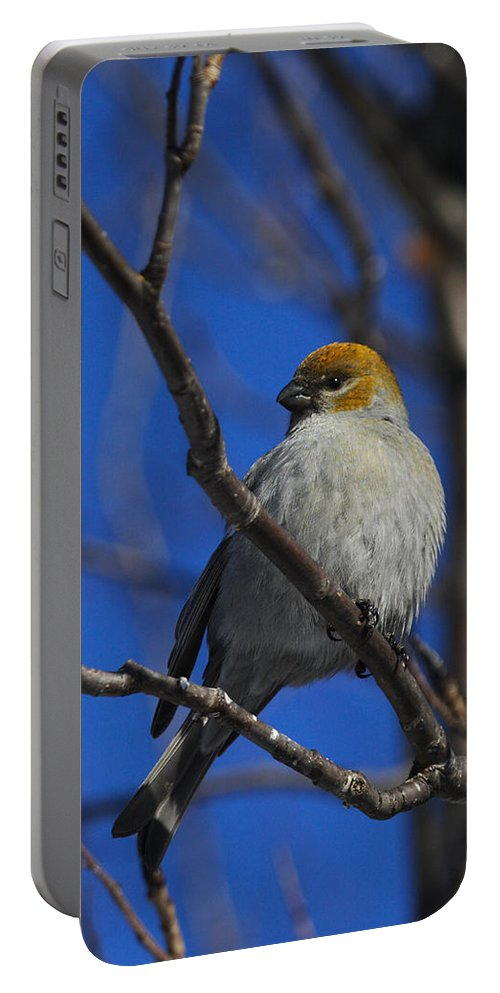 Doug Lloyd Portable Battery Charger featuring the photograph Female Pine Grosbeak by Doug Lloyd
