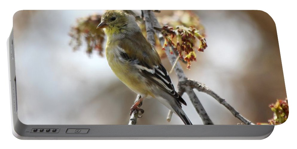 Finch Portable Battery Charger featuring the photograph Finch by Lori Tordsen