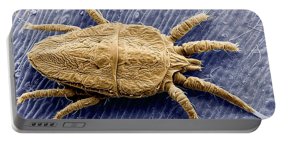 America Portable Battery Charger featuring the photograph Flat Mite by Science Source