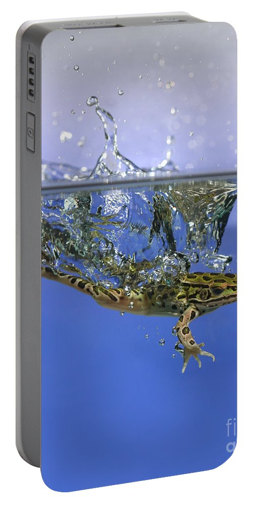 Animal Portable Battery Charger featuring the photograph Frog Jumps Into Water by Ted Kinsman