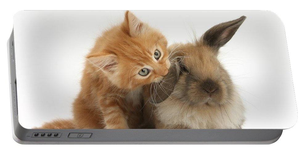Nature Portable Battery Charger featuring the photograph Ginger Kitten And Young Lionhead-lop by Mark Taylor