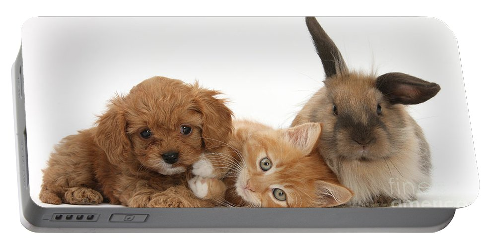 Nature Portable Battery Charger featuring the photograph Ginger Kitten With Cavapoo Pup by Mark Taylor