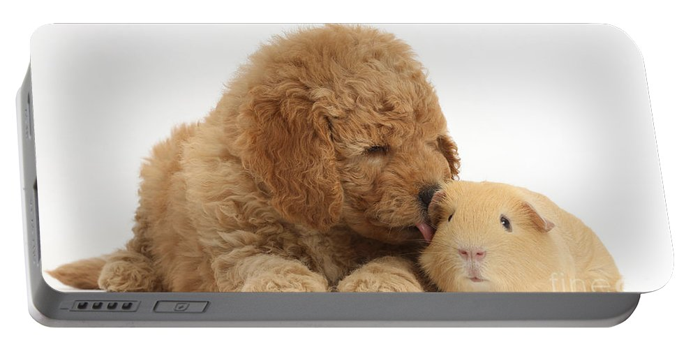 Nature Portable Battery Charger featuring the photograph Goldendoodle Puppy And Guinea Pig by Mark Taylor