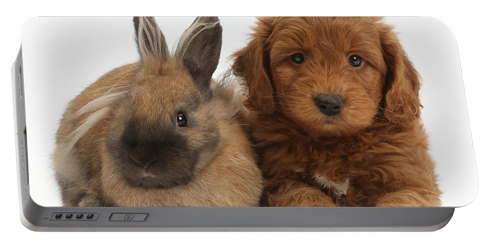 Nature Portable Battery Charger featuring the photograph Goldendoodle Puppy And Rabbit by Mark Taylor