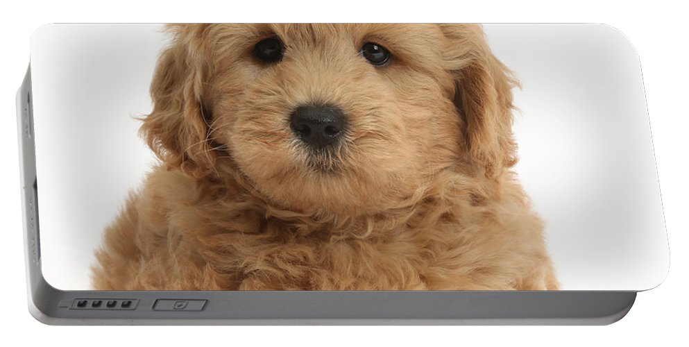 Nature Portable Battery Charger featuring the photograph Goldendoodle Puppy by Mark Taylor