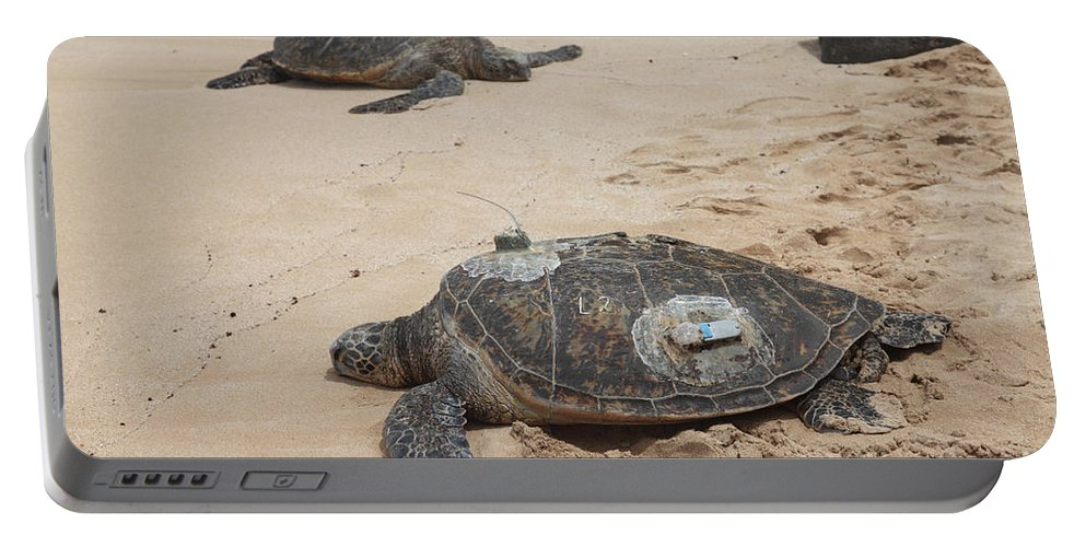 Green Sea Turtle Portable Battery Charger featuring the photograph Green Sea Turtles With Gps by Ted Kinsman