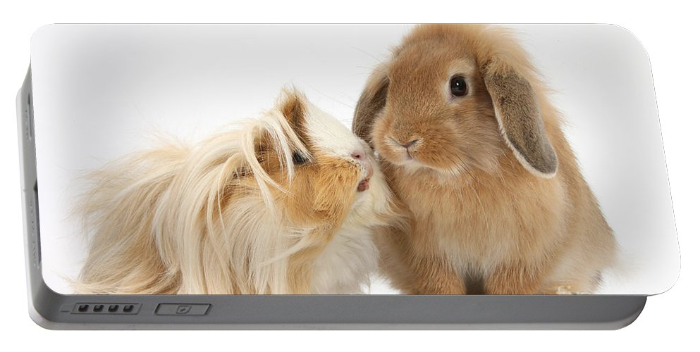 Animal Portable Battery Charger featuring the photograph Guinea Pig And Rabbit by Mark Taylor