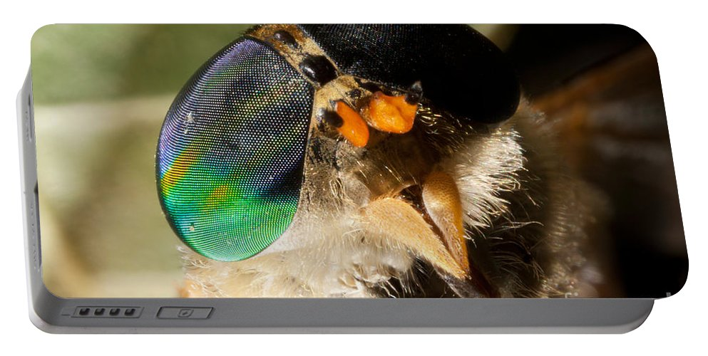 Horse Fly Portable Battery Charger featuring the photograph Horse Fly by Ted Kinsman
