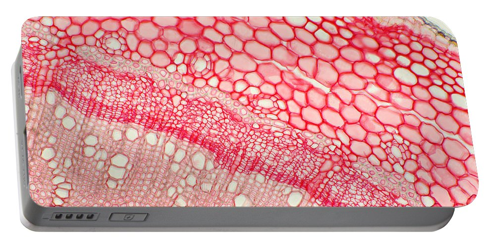 Science Portable Battery Charger featuring the photograph Ivy Stem by Ted Kinsman