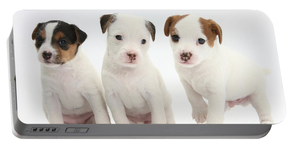 Animal Portable Battery Charger featuring the photograph Jack Russell Puppies by Mark Taylor