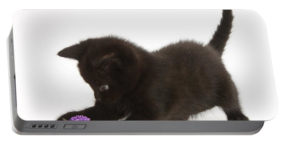 Animal Portable Battery Charger featuring the photograph Kitten by Mark Taylor