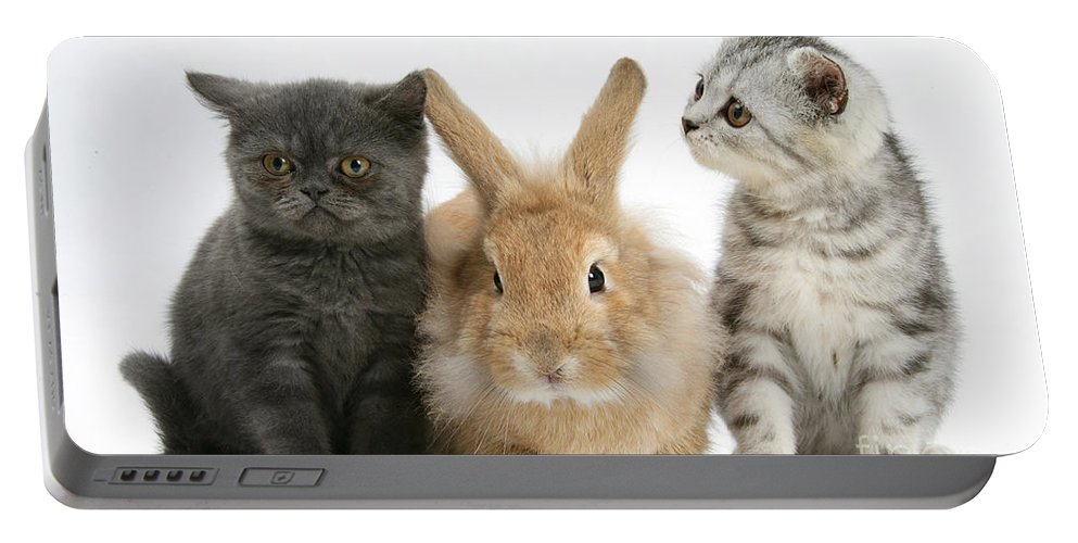 Animal Portable Battery Charger featuring the photograph Kittens And Rabbit by Mark Taylor