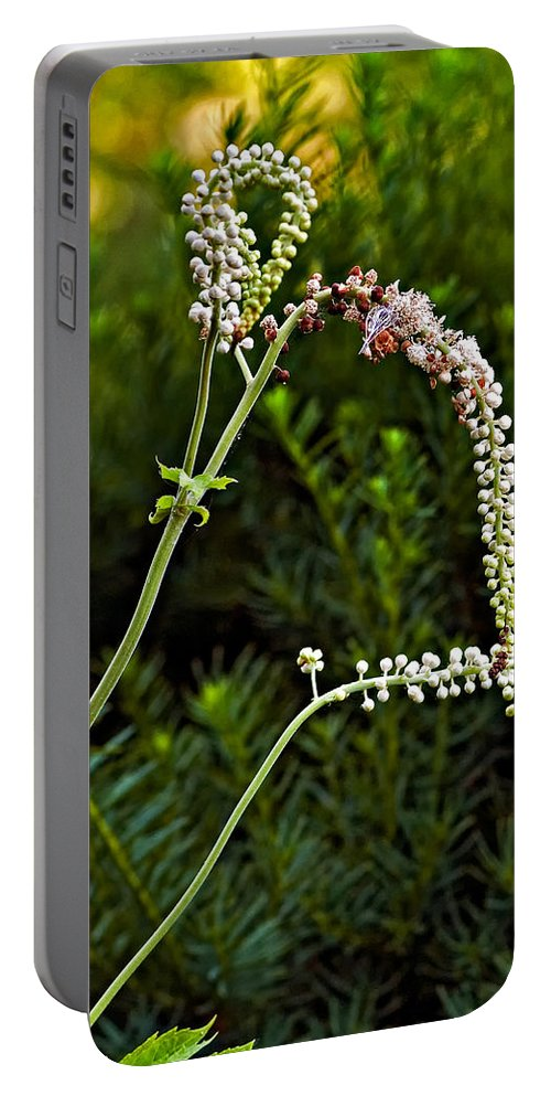 Garden Portable Battery Charger featuring the photograph Lithe One by Steve Harrington