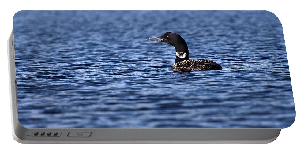 Loon Portable Battery Charger featuring the photograph Loon by Glenn Gordon