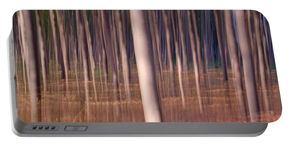 Landscapes Portable Battery Charger featuring the photograph Magical Forest At Sunset by Guido Montanes Castillo