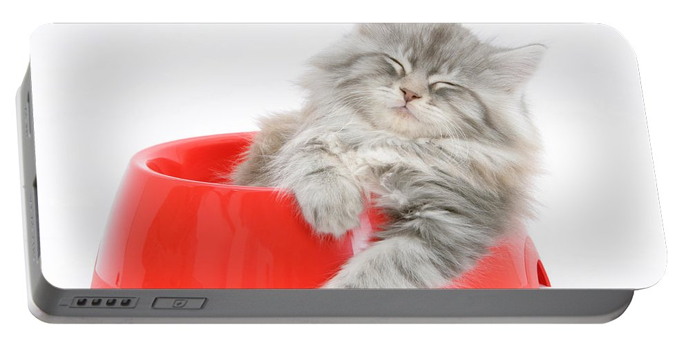 Animal Portable Battery Charger featuring the photograph Maine Coon Kitten by Mark Taylor