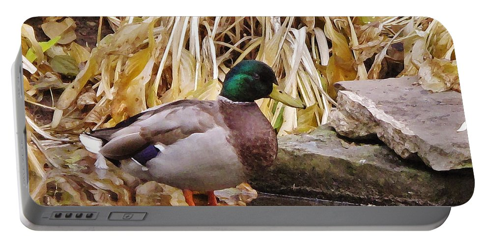 Autumn Portable Battery Charger featuring the photograph Mallard by Ian MacDonald
