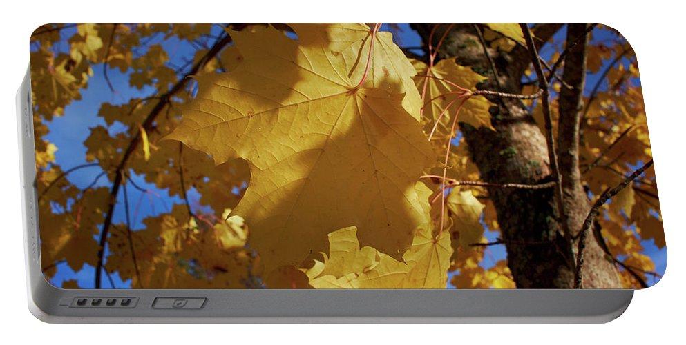Lehtokukka Portable Battery Charger featuring the photograph Maple In Fall by Jouko Lehto