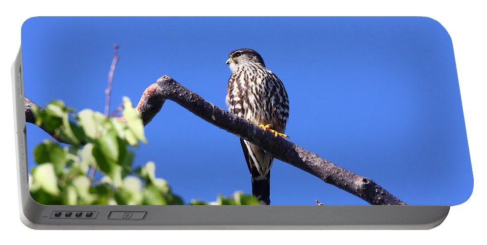 Alaska Portable Battery Charger featuring the photograph Merlin by Doug Lloyd