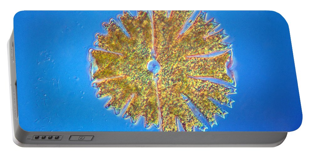 Biology Portable Battery Charger featuring the photograph Micrasterias by Michael Abbey and Photo Researchers