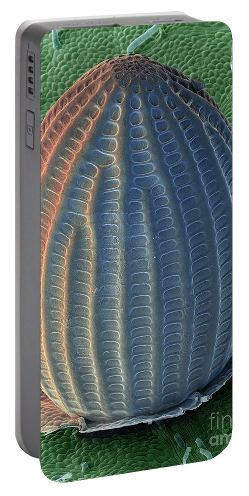 Monarch Portable Battery Charger featuring the photograph Monarch Butterfly Egg, Sem by Ted Kinsman