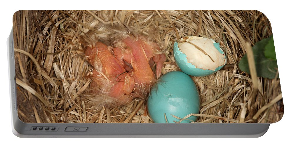 Robin Egg Portable Battery Charger featuring the photograph Newborn Robin Nestlings by Ted Kinsman