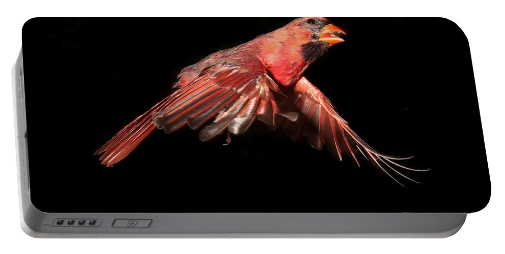 Northern Portable Battery Charger featuring the photograph Northern Cardinal In Flight by Ted Kinsman