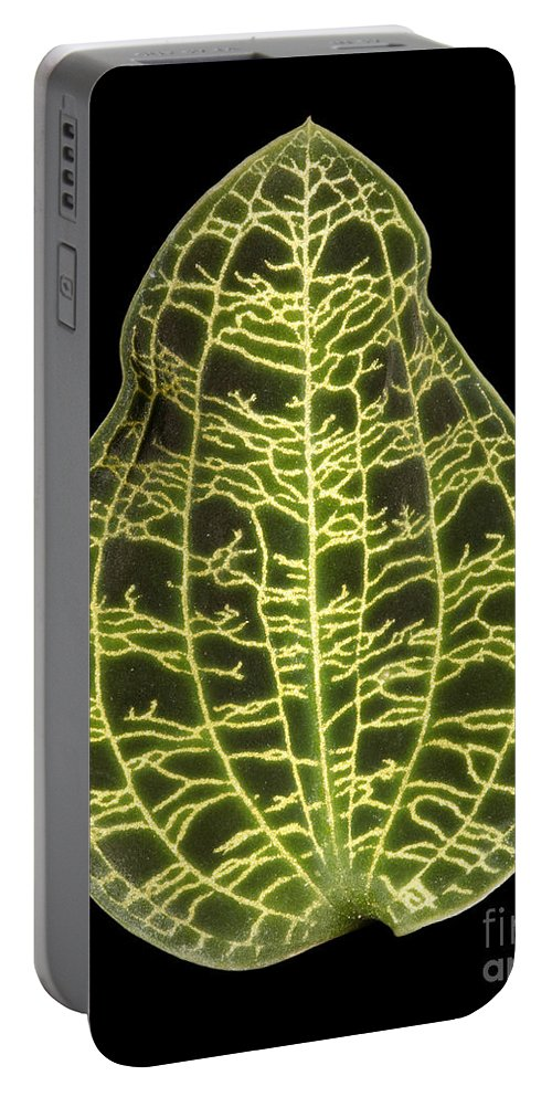 Close-up Portable Battery Charger featuring the photograph Orchid Leaf by Ted Kinsman