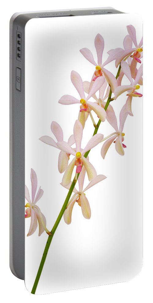 Asian Portable Battery Charger featuring the photograph Orchid Panicle by Atiketta Sangasaeng