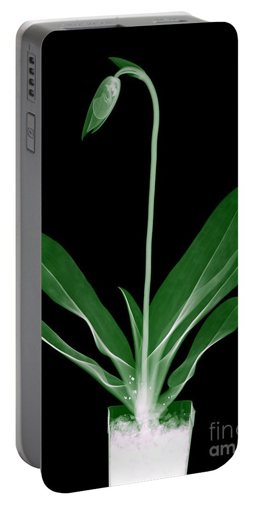 Leaf Portable Battery Charger featuring the photograph Orchid Plant X-ray by Ted Kinsman