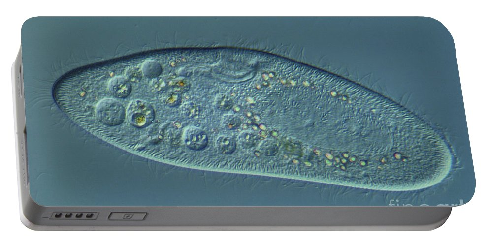 Science Portable Battery Charger featuring the photograph Paramecium Caudatum Lm by M. I. Walker