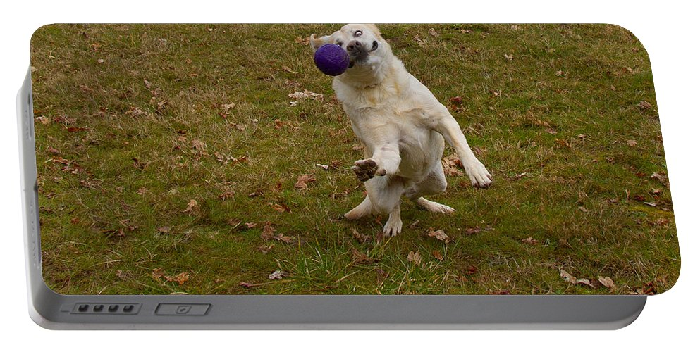 Animals Portable Battery Charger featuring the photograph Pasha by Jean Noren