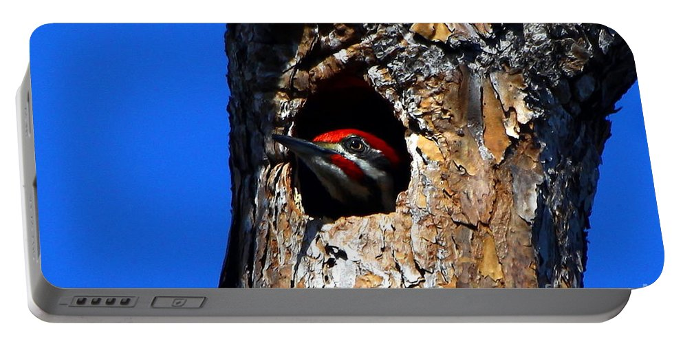 Pileated Woodpecker Portable Battery Charger featuring the photograph Peeking Out by Barbara Bowen