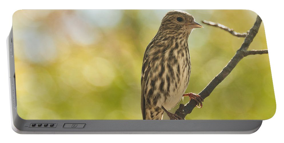 Birds Portable Battery Charger featuring the photograph Pine Siskin by Cheryl Baxter