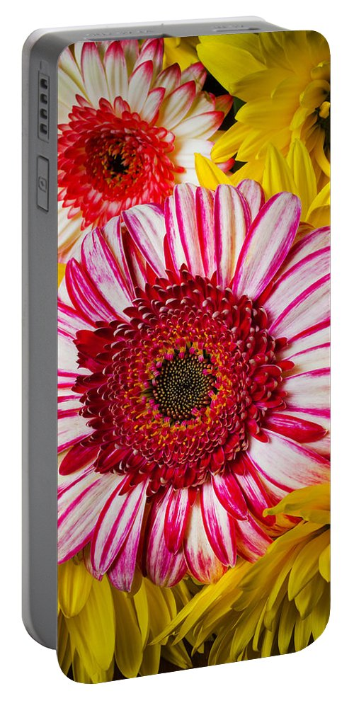 Pink Portable Battery Charger featuring the photograph Pink And Yellow Mums by Garry Gay