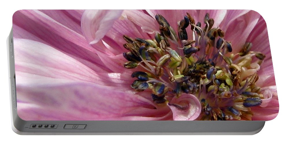 Anemone Portable Battery Charger featuring the photograph Pink Anemone From The St Brigid Mix by J McCombie