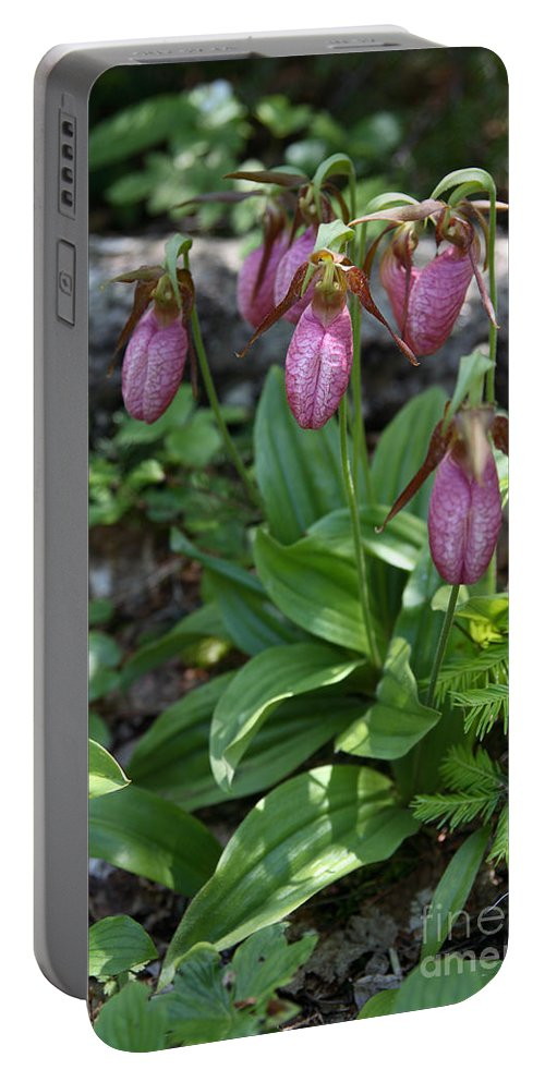 Plant Portable Battery Charger featuring the photograph Pink Ladys Slipper by Ted Kinsman